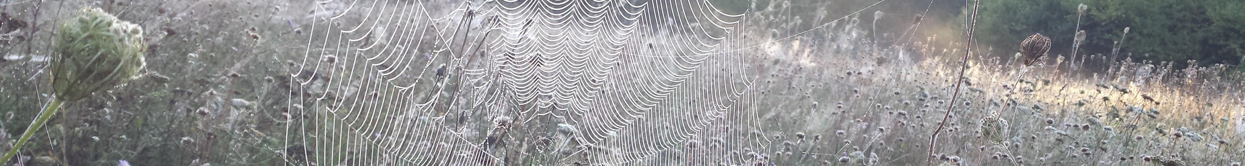 Spinnenweben im Morgentau
